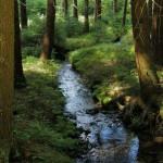 Lesní potůček u Kadova
